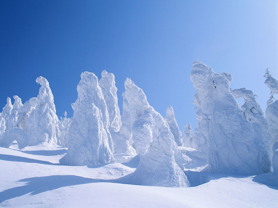 Snow covered trees (Wikimedia Commons)